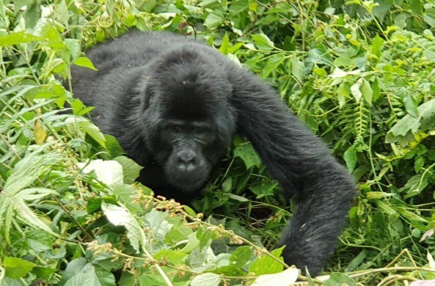Luxury Rwanda Gorilla, Lake Kivu Holiday